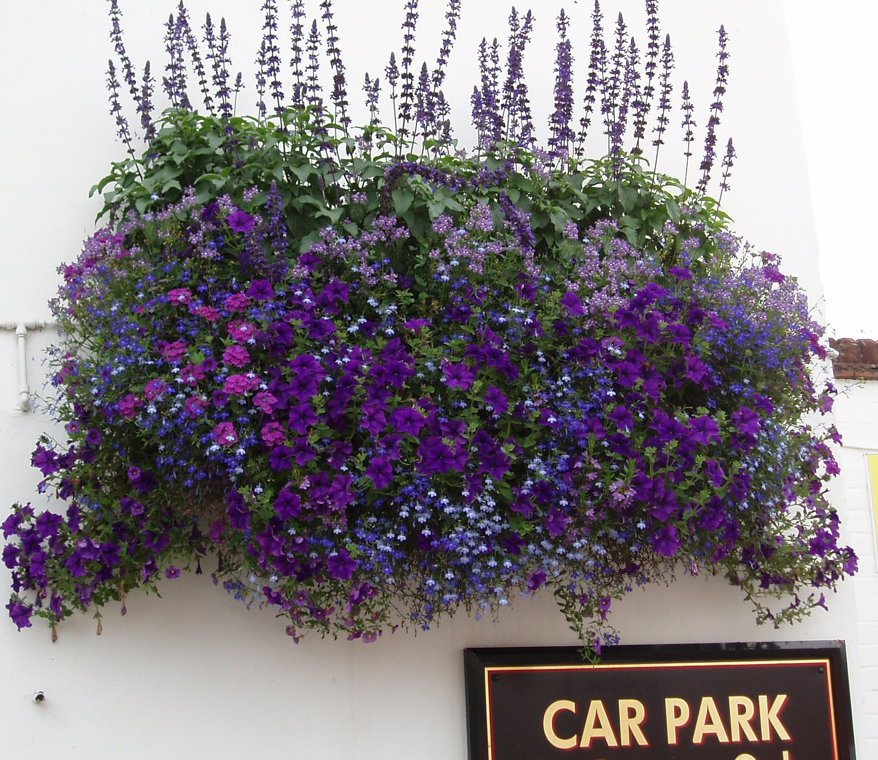Replanting Hanging Baskets – Choice Plants