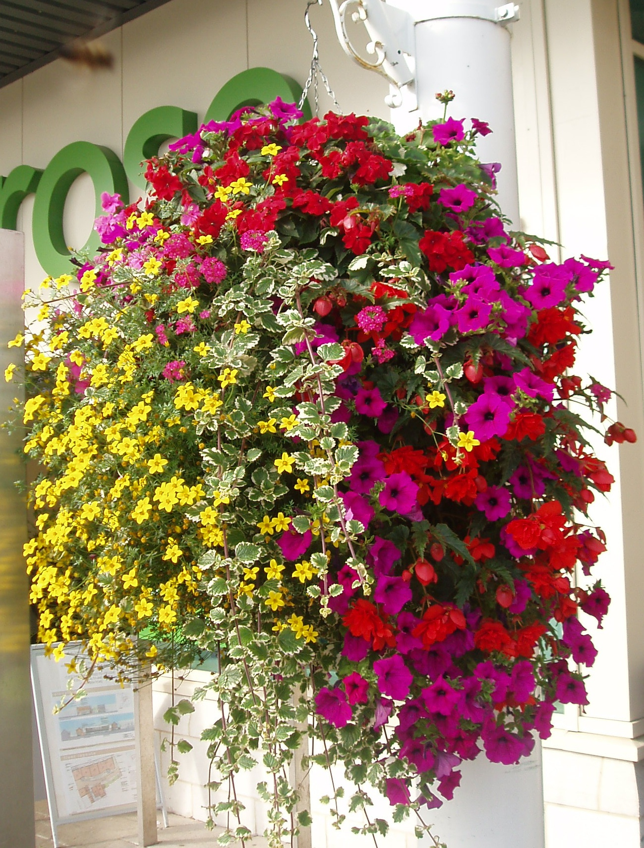 Hanging Flower Baskets Calgary : About us choice plants